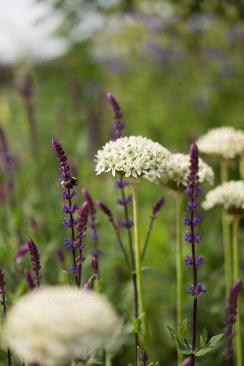Helmingham Hall gardens in Suffolk England