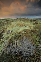 Ålvand Klithede - National Park Thy, Denmark