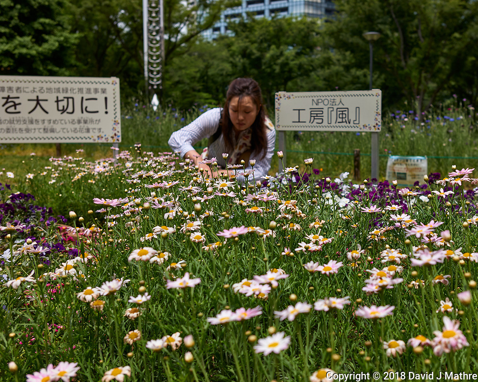 Working the wildflowers at Shinjuku Chuo Park in Tokyo. Image taken with a Leica CL camera and 23 mm f/2 lens.