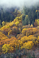 Fall on Cascade Mountain - East Fork Miller River