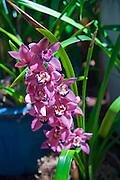 Pink, Purple,  Orchids, Botanical, Gardens, Balboa Park, San Diego, Ca High dynamic range imaging (HDRI or HDR)
