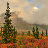 Fall color in the Alaska Range.
