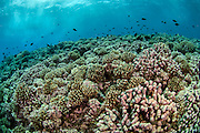 Shallow coral reef in Tiputa Pass, Rangiroa, French Polynesia