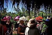 William DeShazer/Staff<br /> Women socialize during the annual Hats in the Garden at the Naples Botanical Garden on Thursday Nov. 15, 2012.