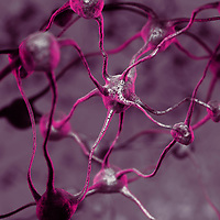 Model of a Biological Neural network of the human brain, interconnected neurons, brain cells and connections, scientific 3D illustration in purple colors