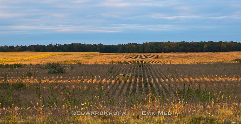 Farm field in early morning light near Strathroy, Ontario, Canada.