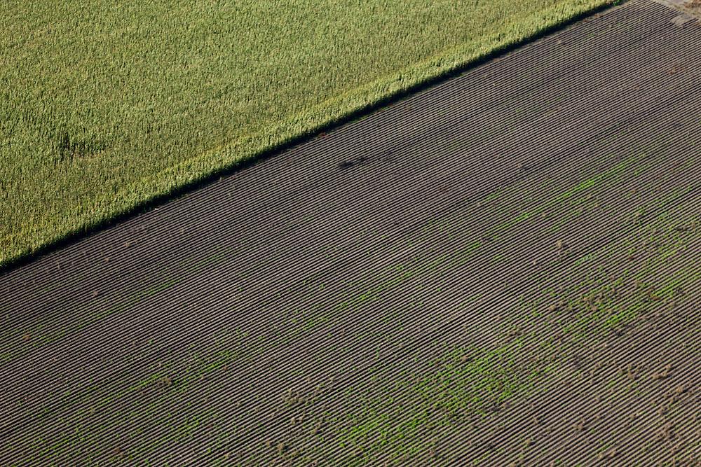 Nederland, Oostelijk Flevoland, Gemeente Dronten, 03-10-2010; Omgeving Biddinghuizen, .ingezaaide akker, jonge planten komen op..Sown field, young plants come up..luchtfoto (toeslag), aerial photo (additional fee required).foto/photo Siebe Swart