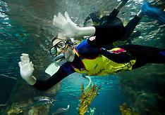 Napier-Haier Pulse swim with the sharks