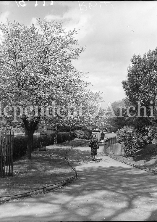 R641 Scenic Views: St Stephen's Green. 10/05/54. (Part of the Independent Ireland Newspapers/NLI Collection)
