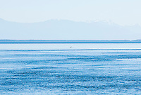 A Orca dorsal fin breaking the water in Haro straight with the Olympic mountains in the distance.  Off San Juan Island Washington, USA.