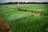Extension agent looks over research crops planted in Kinston. PHOTO BY ROGER WINSTEAD