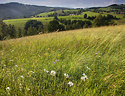 Wildflowers bloom across meadows in the countryside at the foot of the Krkonose mountains, Czech Republic