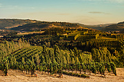 Analemma Vineyards in Mosier, Oregon at Sunset