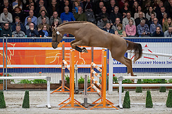 165, Monsieur VDL<br /> KWPN hengstenkeuring - 's Hertogenbosch 2020<br /> © Hippo Foto - Leanjo de Koster<br />  29/01/2020