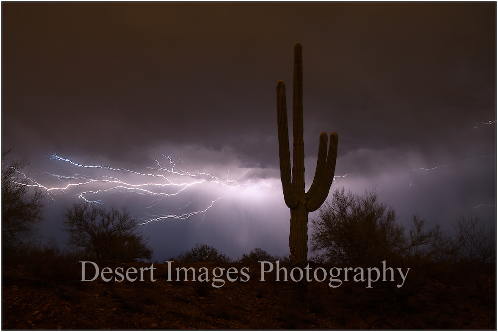 Saguaro with lightning, Saguaro National Park, Tucson, Arizona