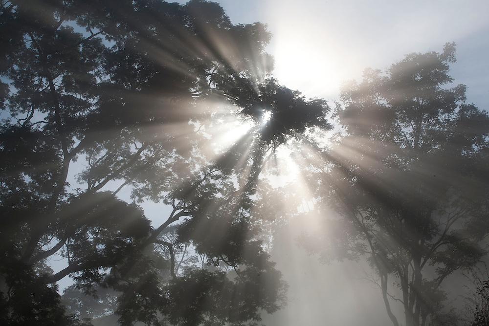 Piranga_MG, Brasil...Raios do sol entre as árvores em Piranga, Minas Gerais...Sun rays between the trees Piranga, Minas Gerais...Foto: LEO DRUMOND / NITRO
