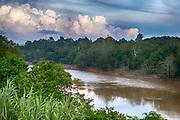 Primary rainforest along the river Sungai Malubuk in Deramakot Forest Reserve, Sabah, Borneo.