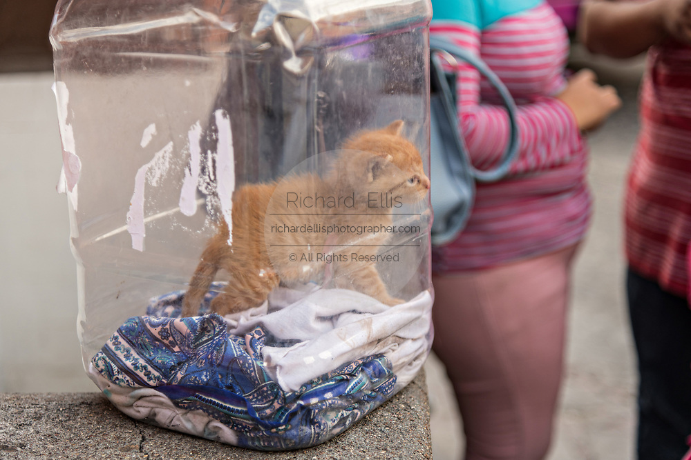 A young kitten being carried in a plastic food container in San Miguel de Allende, Mexico.