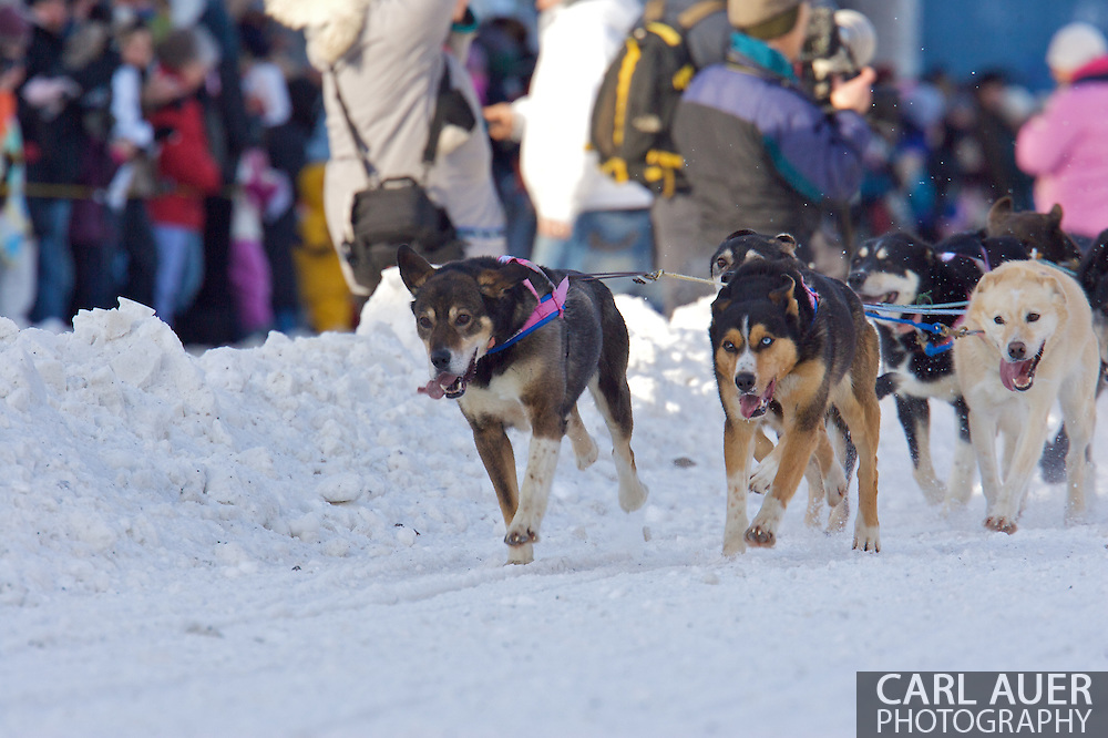 March 7th, 2009:  Anchorage, Alaska: The lead dogs of 5 Time Iditarod Champ Rick Swenson of Two Rivers, Alaska at the start of the 2009 race.