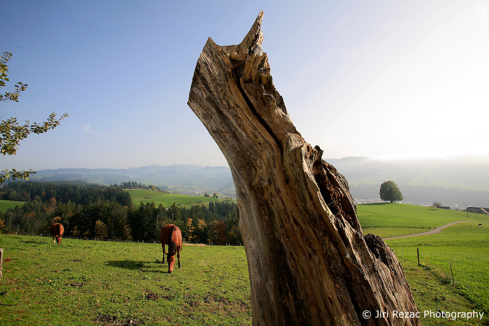 SWITZERLAND EMMENTAL LANGNAU 8OCT10 - Horses on a pasture above Langnau im Emmental, Switzerland...jre/Photo by Jiri Rezac..© Jiri Rezac 2010