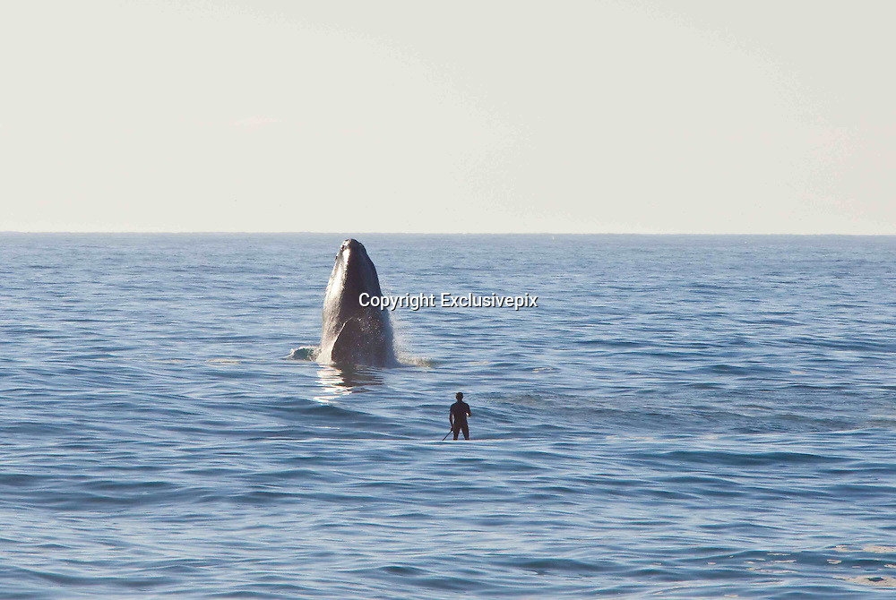 Cape Town - South Africa - EXCLUSIVE - <br /> Stunning pictures showing a Paddlesurfer's close encounter with a Whale<br /> <br /> this picture taken by  Photographer Michael Poliza from Germany shows Axel Ohm, a stand-up paddlesurfer, enjoys unsurpassed views of a breaching Souther Right Whale in Walker Bay near Grootbos Nature Reserve, Western Cape.<br /> (&copy;Michael Poliza/Exclusivepix)