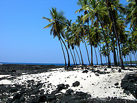 Hawaii, South Pacific.  Lava strewn beach with a stand of palms against an azure sky.