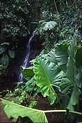 Vaipahi Waterfall and Gardens, Island of Tahiti, French Polynesia<br />