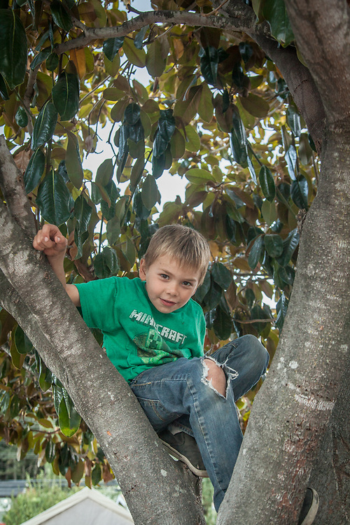 I found my six year old neighbor, Bradly, in a tree in his front yard.