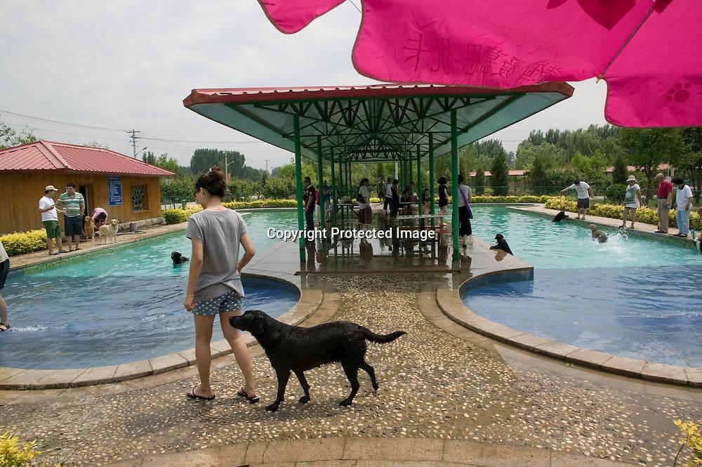BEIJING, den 5. Juni, 2011 : Hundehalter und und ihre Lieblinge  geniessen ihr Wochenende an einem Swimming Pool fuer Hunde in einem Vorort von Peking.