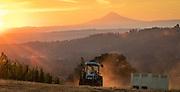 First day of 2016 harvest at Anne Amie Wines, Twelve Oaks Vineyard, Chehalem Mountains AVA, Willamette Valley, Oregon