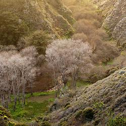 Bixby Creek below the Bixby Bridge, Big Sur, Monterey County, California