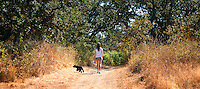 Taylor walks the dry grass trails of Uplands Park in Victoria, BC, with her dog.