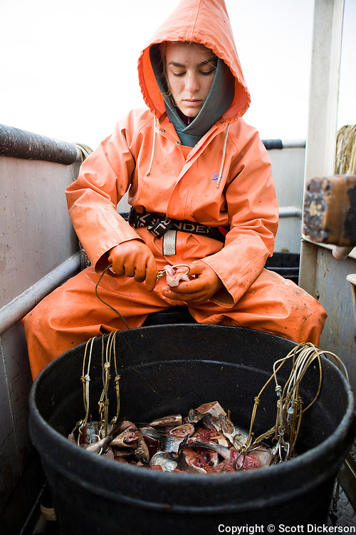 Claire Laukitis baits hooks with pink salmon which will be used while commercial halibut longline fishing in the Aleutian Islands, Alaska.