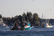 F/V Owyhee, a commercial fishing seiner, brings in its net with promising signs of herring inside during the 2007 Sitka Herring Sac Roe fishery.