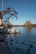Henley, Oxfordshire. England General Views Henley Town  looking down the River Thames toward Temple Island<br /> <br /> Thursday  01/12/2016<br /> © Peter SPURRIER<br /> LEICA CAMERA AG  LEICA Q (Typ 116)  f1.7  1/10000sec  35mm  8.7MB