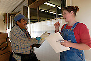 Vermont dairy farmers depend on Mexican migrant workers to milk cows and do farm chores.
