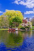 Swan boat on the lagoon at the Public Garden, Boston, Massachusetts
