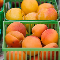 Apricots and yellow plums from Feast of Fields Organics