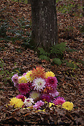 Dahlia bouquet in woods, Dorset, VT