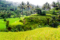 Bali, Karangasem, Amlapura. The road from Rendang to Amlapura passes through beautiful rice paddies and dense forests.