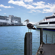 The Ferry Terminal at Auckland Harbour, showing the Hilton Hotel in the background. Auckland, New Zealand, 31st October 2010. Photo Tim Clayton.