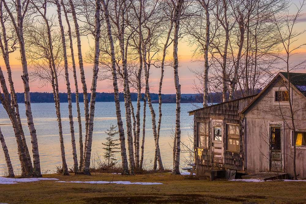 A run down shack sits on the edge of the sea behind a stand of beautiful white birch trees as a colorful sunset sky reflects on the water.