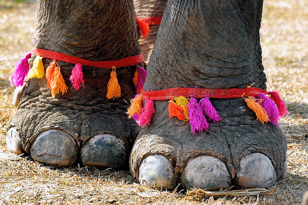 An elephants feet decorated for the Elephant Asia festival at Hongsa, Laos.