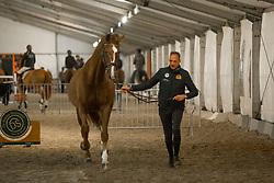 Van der Meer Patrick, NED, Zippo<br /> Jumping Mechelen 2017<br /> © Sharon Vandeput<br /> 26/12/17
