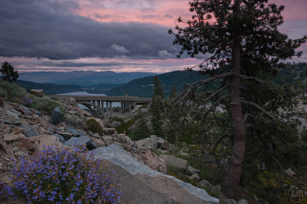 """""""Donner Lake Sunset 16"""" - Photograph of penstemon wildflowers and Rainbow Bridge at sunset above Donner Lake in Truckee, California."""
