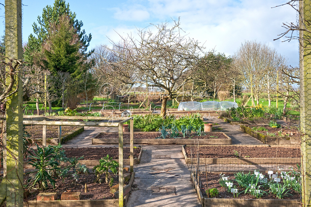 Raised bed nursery area with mixed planting including Malus cv (apple) tree, ferns, Galanthus varieties and vegetables<br /> <br /> <br /> <br /> Ivycroft Plants, Herefordshire, England
