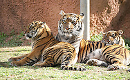 March 6, 2012: Oklahoma City Zoo