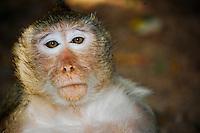 Natural sc Monkey at Wat Phnom