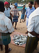 Sri Lanka, Ampara District, Arugam Bay, Pottuvil a small fishing village and popular surfing resort. Local fishermen haggling over the catch of the day