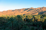 AGDZ, MOROCCO - 13th June 2015 - Landscape of an oasis palmery at sunset in the Draa Valley with mountain range background, Agdz, Southern Morocco.